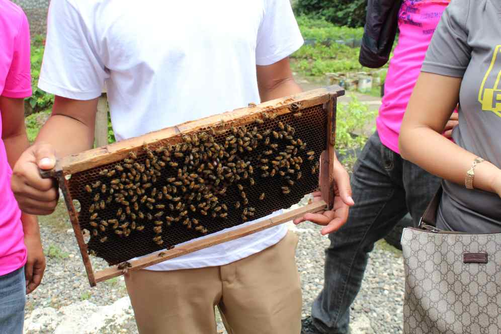 Bohol Bee Farm Tour, Bohol Philippines